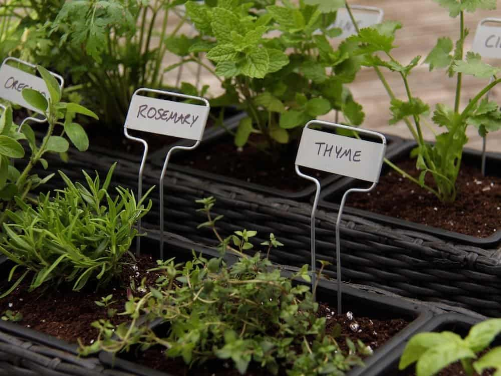Container Herb Garden Showing Herb Plants Like Rosemary And Thyme Planted  In Herb Garden Soil In