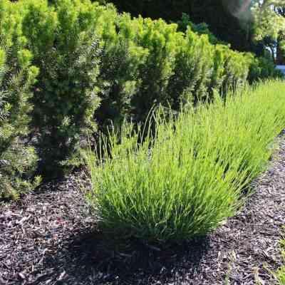 3 Organic Mulch Options for a Thriving Garden