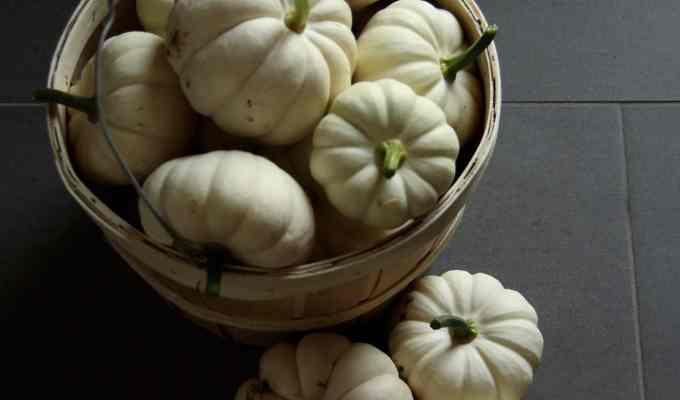 How to Grow Organic Pumpkins