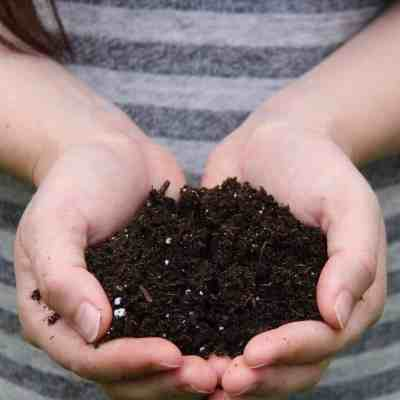 Types of Soil: What's in Your Garden?
