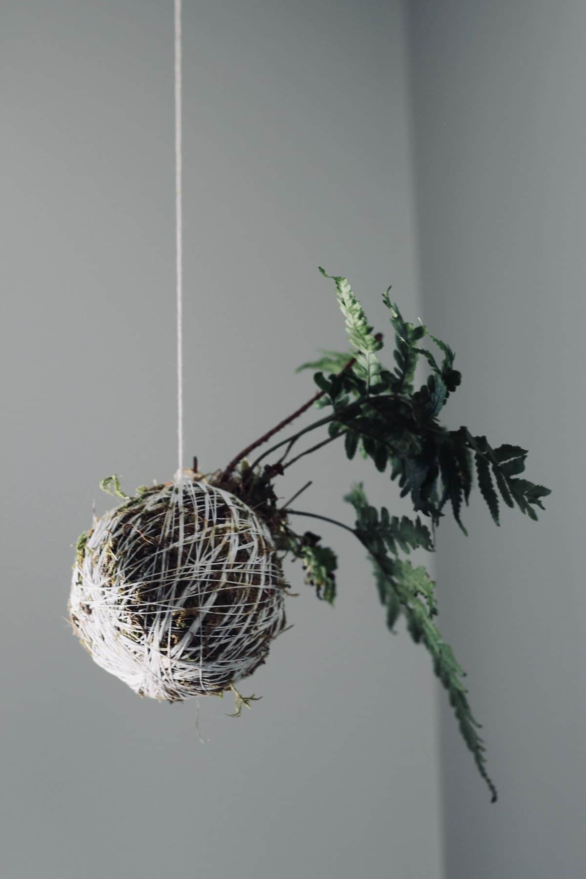 green fern planted in moss ball hanging from white string against a white background