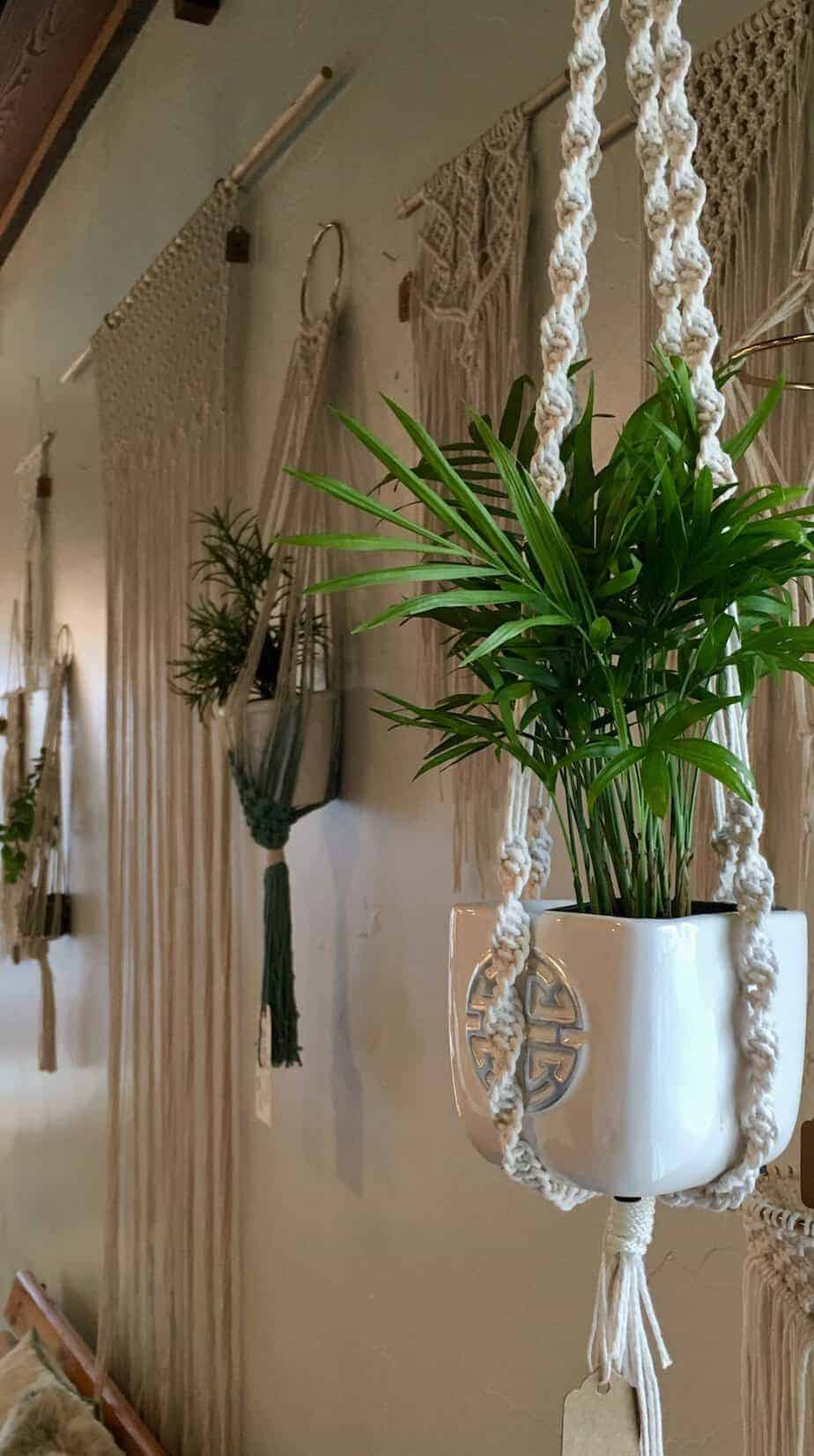 10 Hanging Plants and Ideas for Hanging Planters You'll ... on Plant Hanging Ideas  id=96214