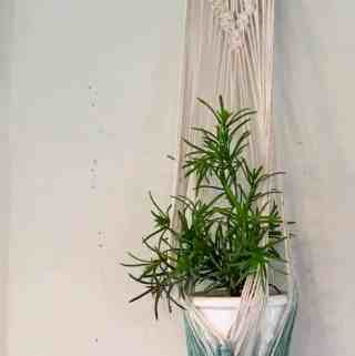 Hanging plant in macrame plant holder