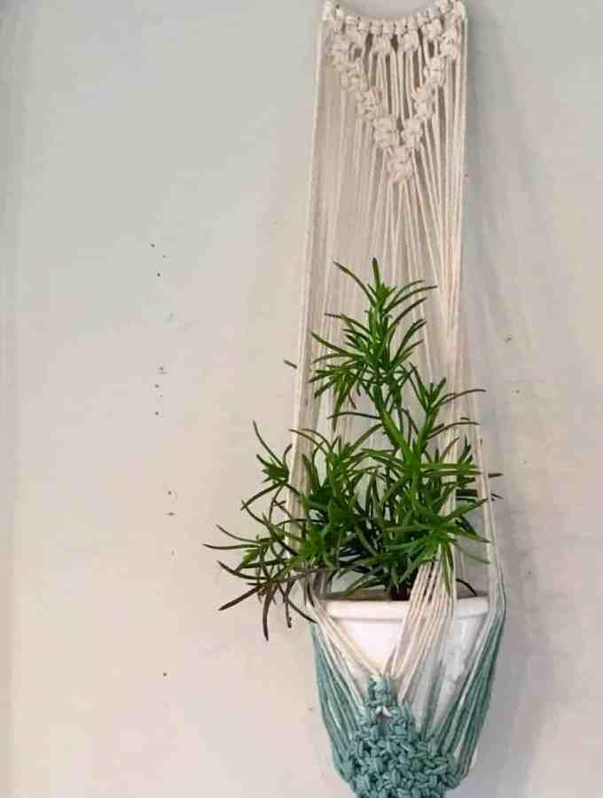 Hanging plant in macrame plant holder