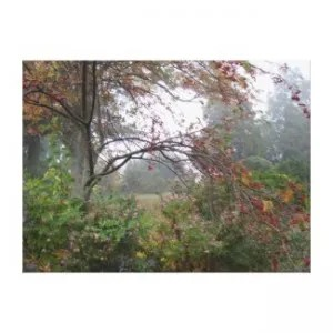 Foggy Autumn Morning In The Country Stretched Canvas Print