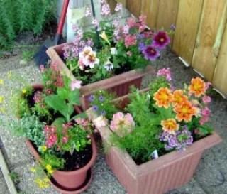 conatiner plants