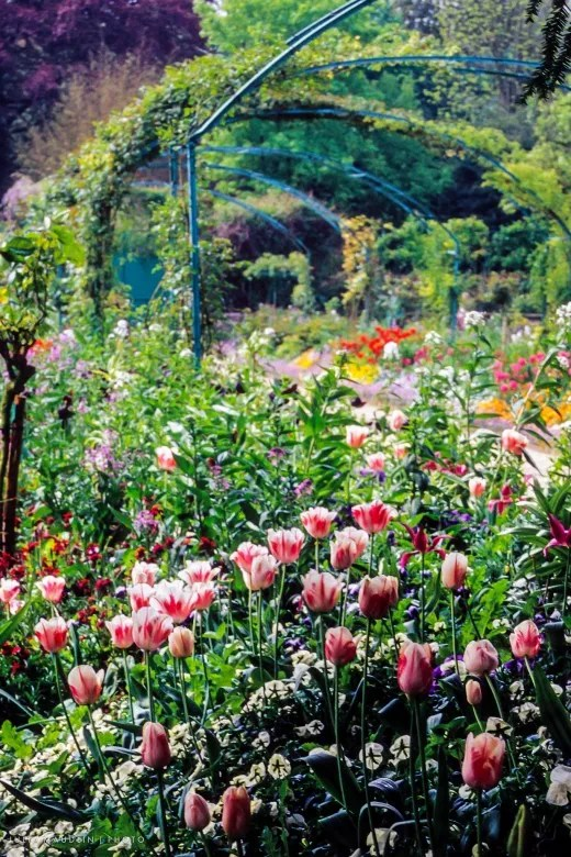 Image Result For How To Grow A Small Garden