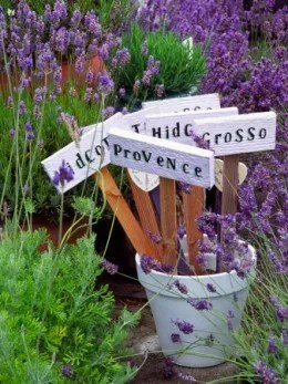 container of lavender with name stakes
