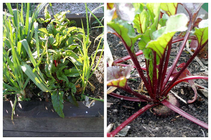 Beetroot Garden Collage