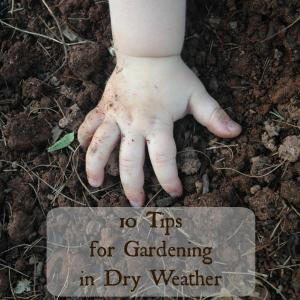 Tips for gardening in dry weather