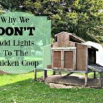 Why We Don't Add Lights to the Chicken Coop-Homestead Blog Hop #50