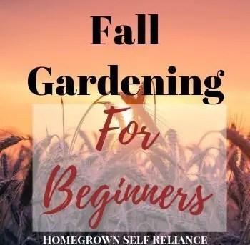 Fall Gardening for Beginners