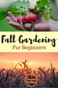 Fall gardening for beginners - what should you grow in your fall garden? From cover crops to improve the soil, to last ditch efforts to get more food, this post will help you decide what to grow!