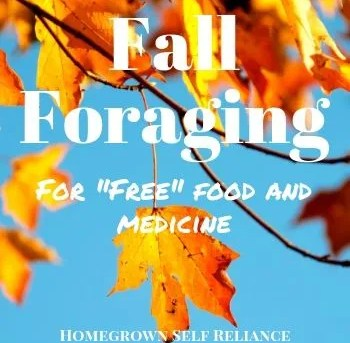 Free medicine and food - what you need to forage in the fall