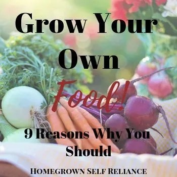 Fresh vegetables - Grow your own food! 9 reasons why you should!