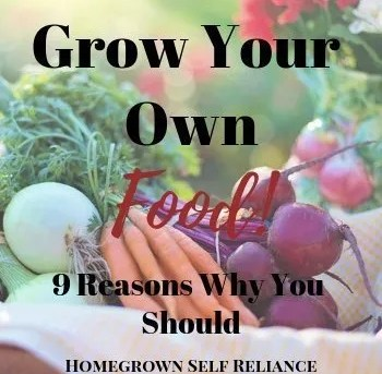 Grow your own food - 9 great reasons why you should!