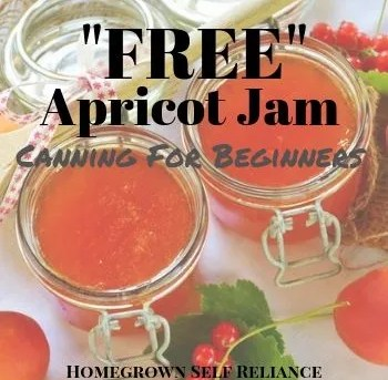 Free Apricot Jam - Canning for Beginners