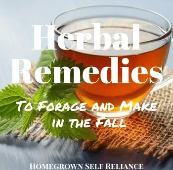 Herbal Remedies to Make Now to Prepare for Winter