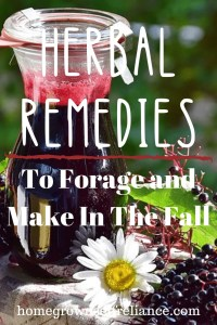 Elderberry syrup - Herbal remedies to forage and make in the fall
