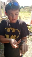 David found this 11 inch spotted newt... The largest I have ever seen.