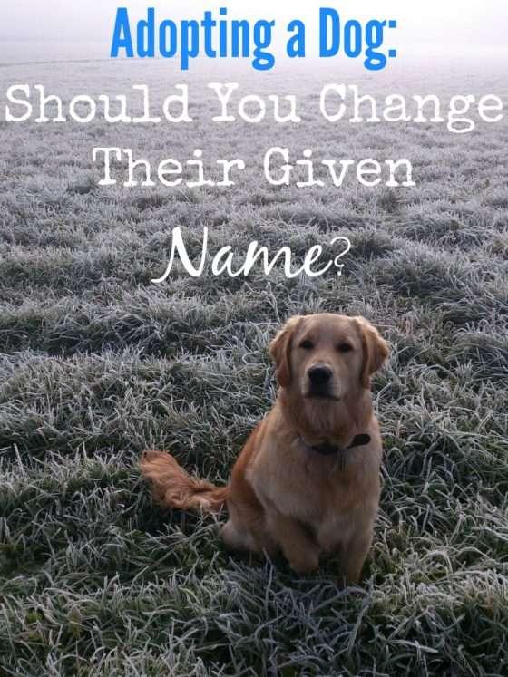 Good Cop Dog Names