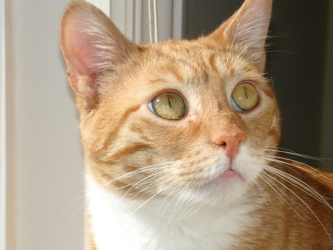 What Are the Warning Signs Your Cat is Sick?