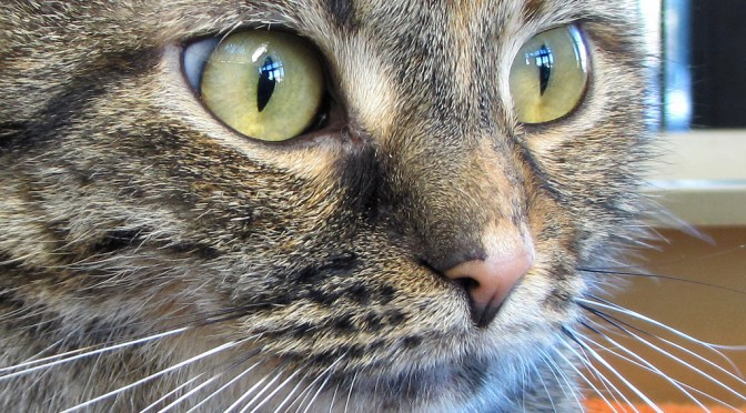 Preventing and Treating Fleas in Cats – The Good, The Bad and The Ugly