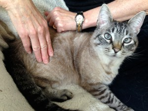 A Guide to Checking Your Cat's Vital Signs at Home