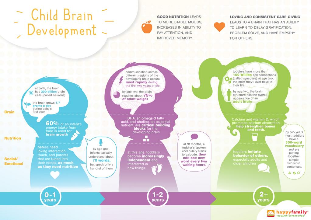 Toys And Brain Development In Kids : Brain development various stages and growth process