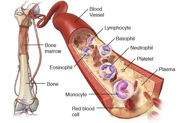 Natural Cures For Kidney Cancer