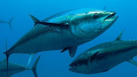 Health benefits of tuna fish