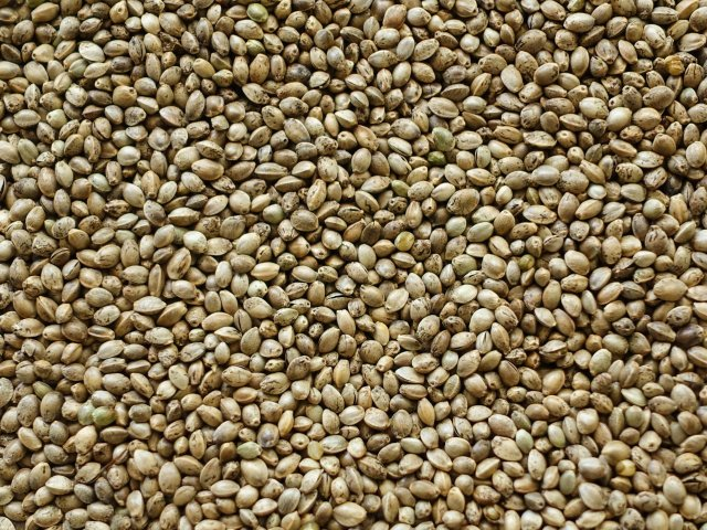 Hemp seeds uses and health benefits