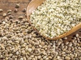 Hemp seeds uses and health benefits