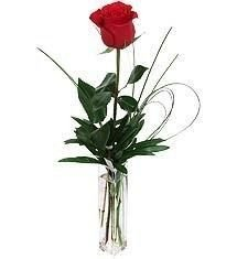 Single Red Rose - Florist in Westcliff on Sea
