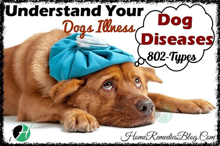 Dog Diseases - Full List of Dog Diseases