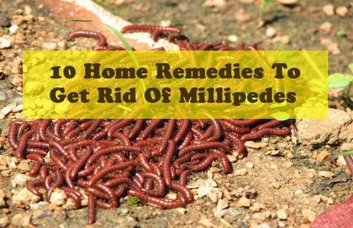 Best Way Kill Centipedes