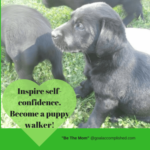 Black lab puppies. Text reads: Inspire self-confidence. Become a puppy walker!