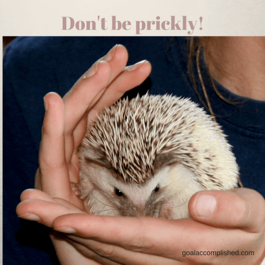 Girl holding hedgehog. Pray for your daughter not to be prickly.