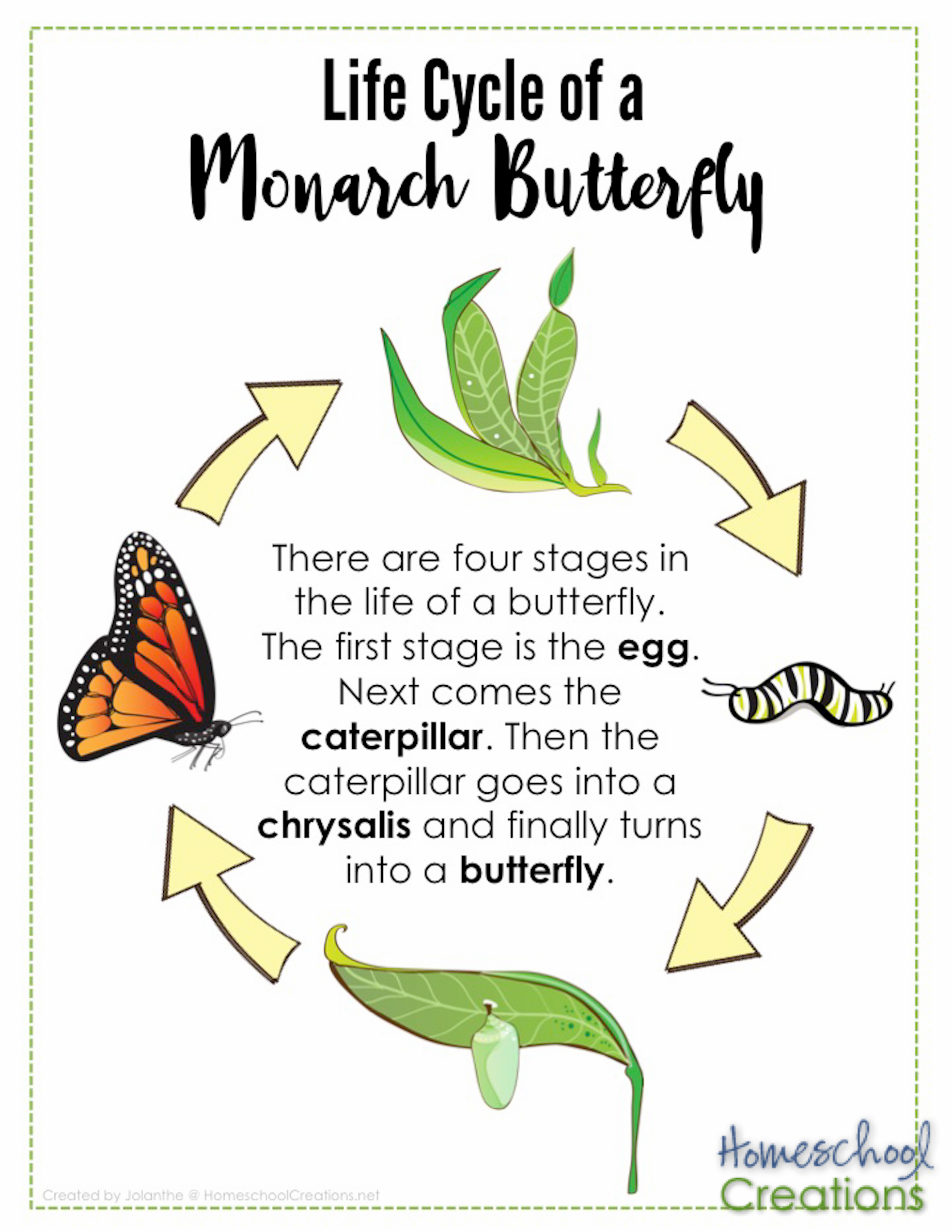 Monarch Butterfly Life Cycle Worksheet