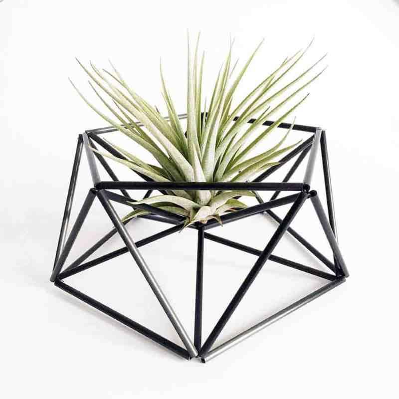 Table Planter Mars in Carbon zwart met gaaf luchtplantje | www.homeseeds.nl | #airplant #luchtplantje #tillandsia #home