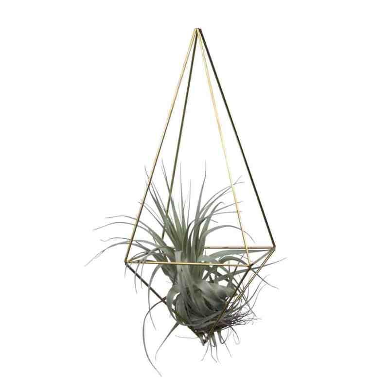 Super hippe eyecatcher is deze himmeli drop medium van messing   Hang himmelis samen op ene leuke plek in je huis met een luchtplantje   #tillandsia #luchtplant #draadzaken   www.homeseeds.nl