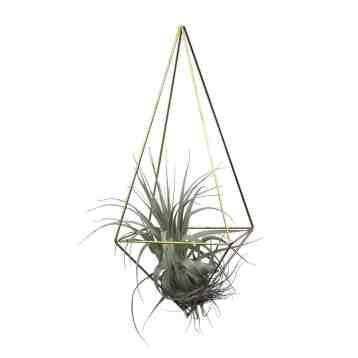 Super hippe eyecatcher is deze himmeli drop medium van messing | Hang himmelis samen op ene leuke plek in je huis met een luchtplantje | #tillandsia #luchtplant #draadzaken | www.homeseeds.nl
