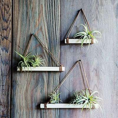 Luchtplantjes op een plankje aan de muur | 9 makkelijke diy tips voor luchtplantjes in huis | www.homeseeds.nl