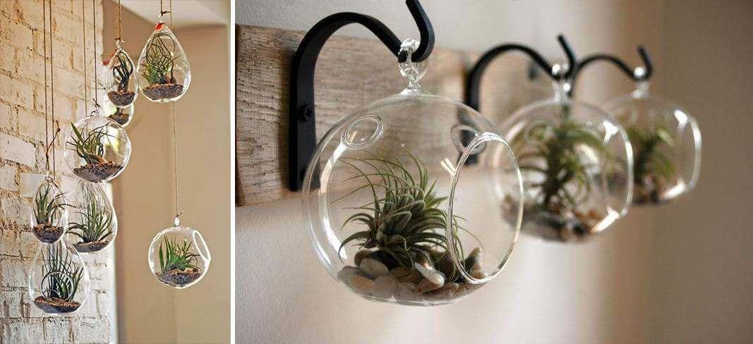 hang luchtplantjes in een glazen bol aan het plafond | 9 eenvoudige diy tips voor luchtplantjes in huis | www.homeseeds.nl