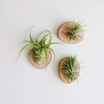 9 leuke diy ideeën voor luchtplantjes in huis