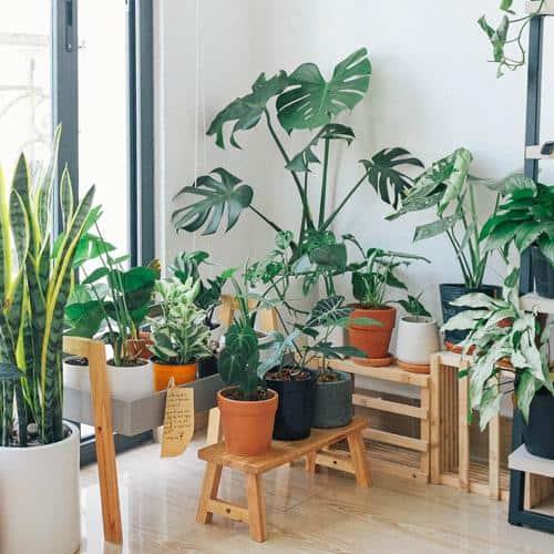9 Hippe kamerplanten voor jouw urban jungle 2020