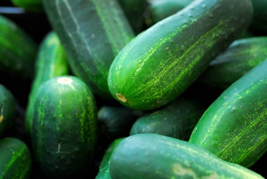 Refrigerator dill pickles | Homesick Texan