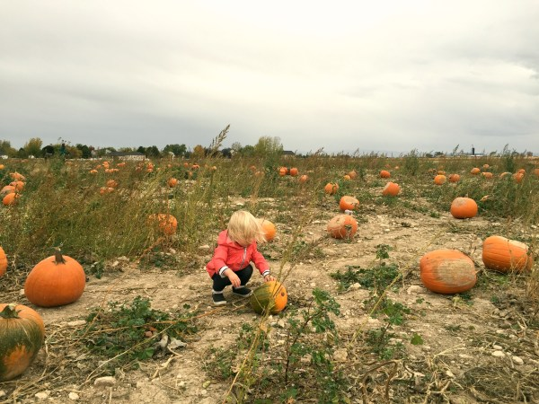 rylee-pumpkin-patch