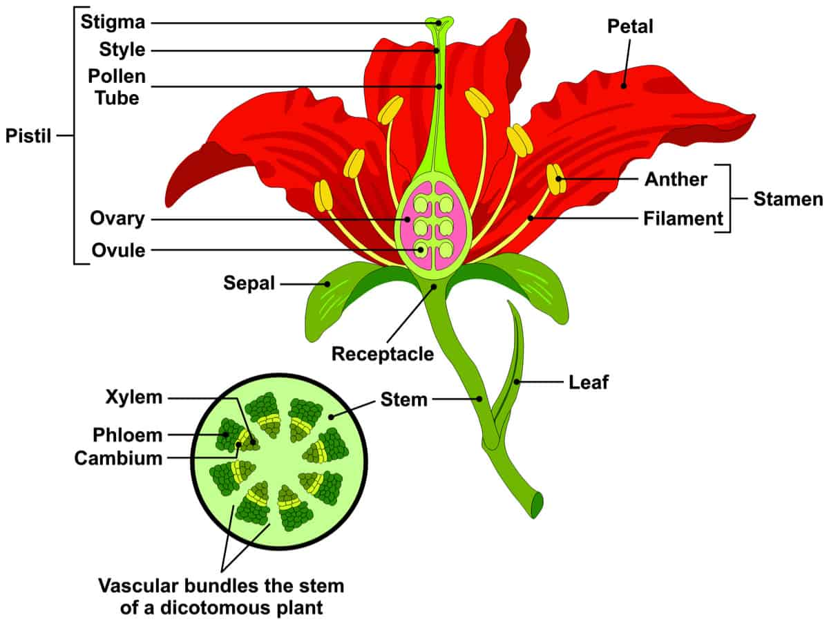 Stem And Leaf Diagram Worksheet