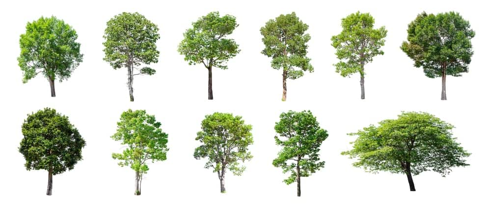 60 Different Types Of Trees Names Photos And More